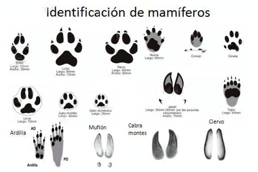 huellas mamíferos